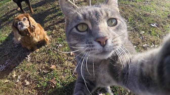 """Karşınızda Selfie Düşkünü Kedi """"Manny"""""""