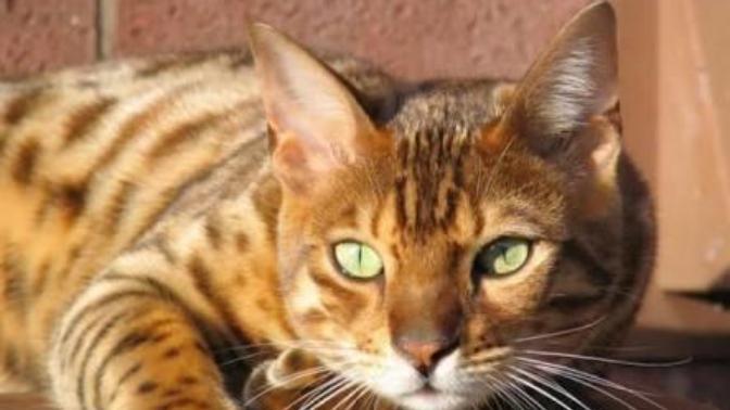 Kedinin İslam'da ki yeri hakkinda neler biliyoruz?