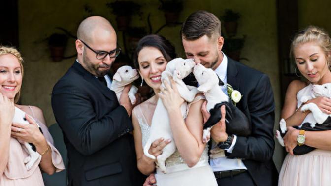 Gelin Buketi Yerine Sahiplendikleri Minnoş Köpekler İle Düğün Fotoğrafı Çektiren Tatlı Çift!