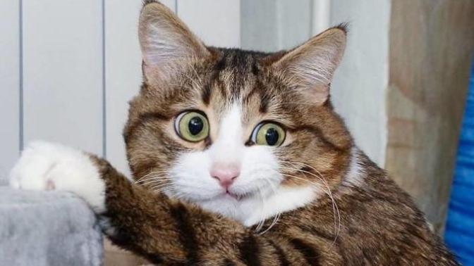 Hayatında İlk İlişkisini Yaşayanların Standart Hallerini Canlandıran Afacan Kedi Recai!