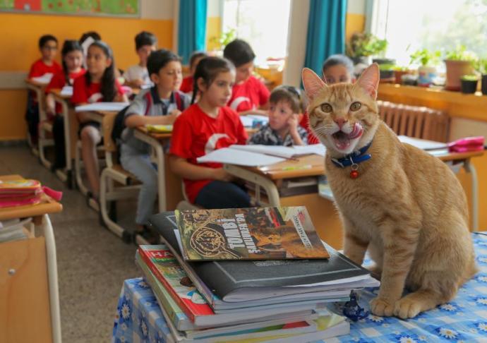 Ünlü Kedi Tombi Kitap Kahramanı Oluyor