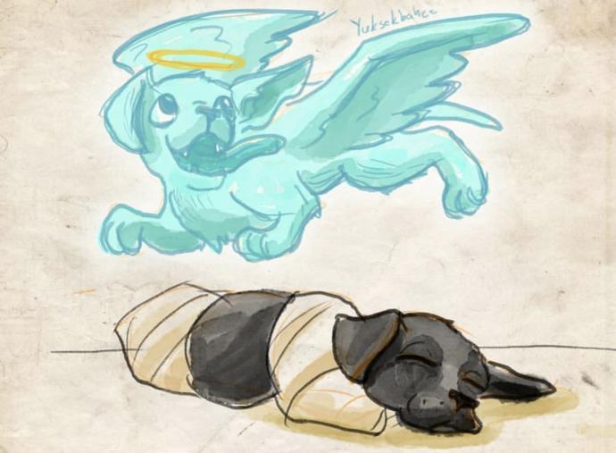 Kuyruğu ve Bacakları Kesilen Yavru Köpek Hakkında Kan Donduran İhtimal! Kesilen Bacaklar Kara Büyü İçin mi Kesildi?