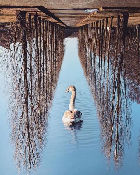 Kafanız Karışmasın, Bu da Bir Sanat: Dönüp Dönüp Bakacağınız Göz Yoran Fotoğraflar!