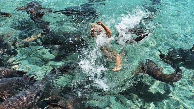 Güzel Modele Tatil Sırasında Köpek Balığı Saldırdı