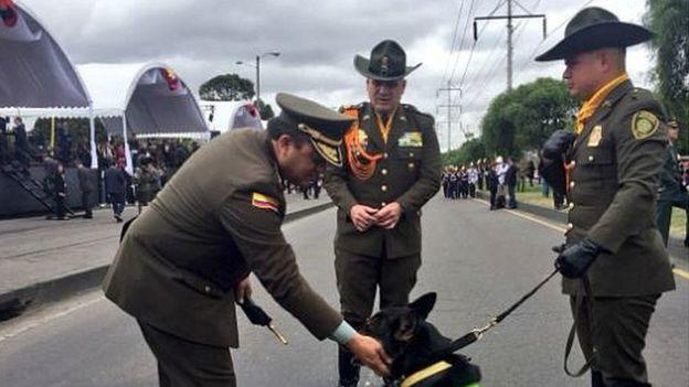 Kolombiya'nın Ünlü Uyuşturucu Çetesi, Narkotik Köpeğinin Başına Ödül Koydu