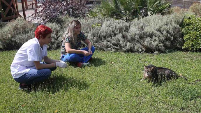 19 Kiloluk Obez Kedi Veteriner Yardımıyla Zayıflayacak