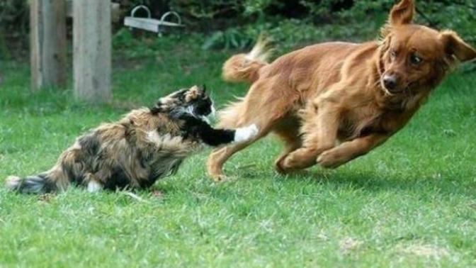 Birbirinden Nefret Eden Hayvanlar!