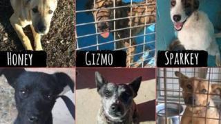 Yaşanan Kuraklık Nedeniyle Uyutulacak Sevimli Köpekler Kurtarıcılarını Arıyorlar