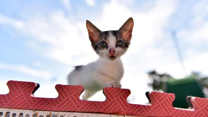Kedilerin Buluşma Noktası: Miyavpark