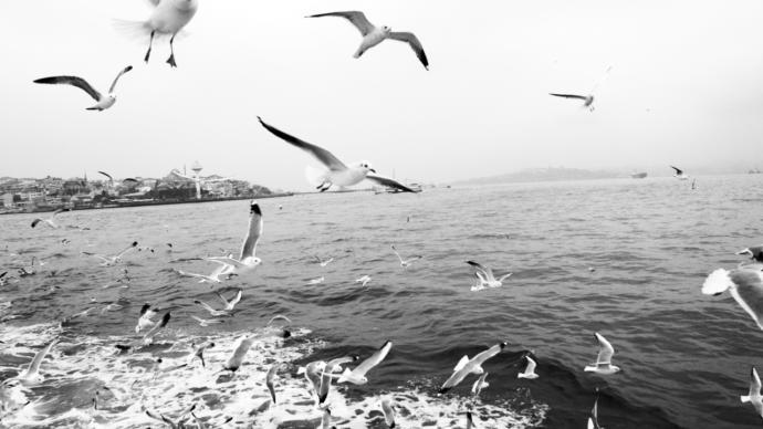 Zincirlerinizi Kırdıracak Bir Özgürlük Kitabı: Martı Jonathan Livingston