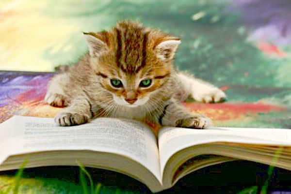 Oyun oynama, kitap oku..