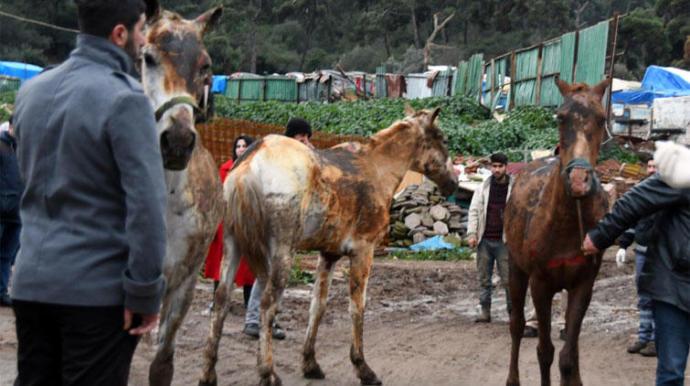 Büyükada'da Çıkan Yangında 9 At Yanarak Telef Oldu