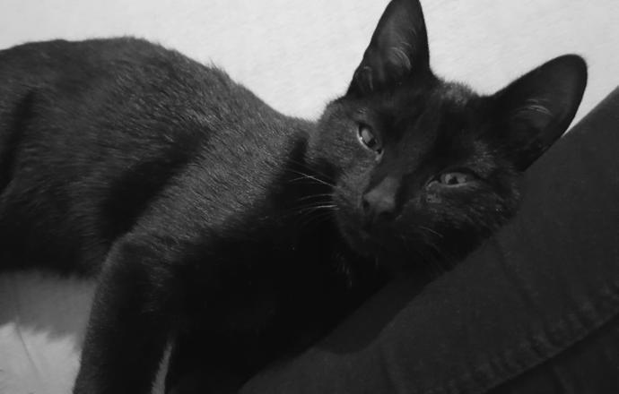 Kedi Besleyenlerin İyi Bildiği Gerçekler
