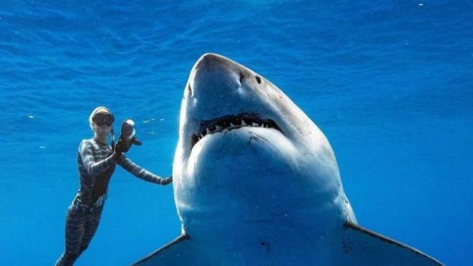 Dünyanın En Büyük Köpek Balığını Görüntülediler