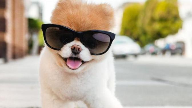 Dünyanın En Ünlü Köpeği Öldü: Sevenleri Yasa Boğuldu