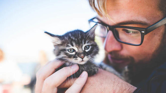 Bugün 17  Şubat  Dünya Kediler Günü! İşte Bu Sevimli Varlıkları Sevmemiz İçin 6 Neden