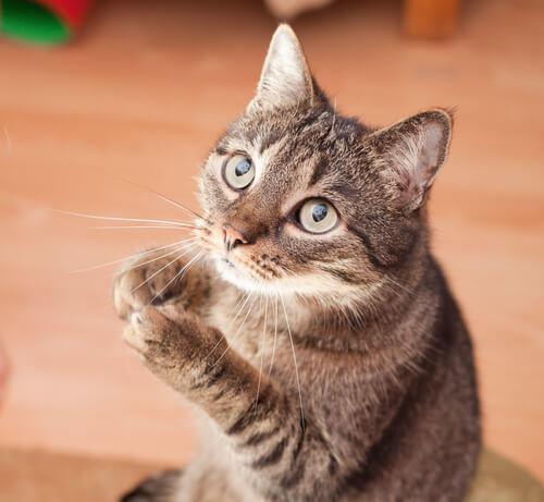 Kedinizi cezalandırmayın