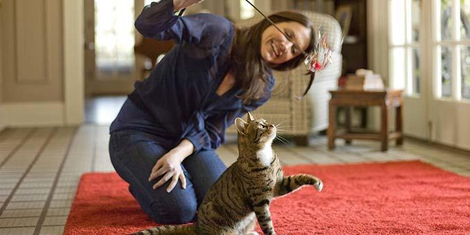 Kedinizi Mutlu Edecek 7 Önemli Nokta!