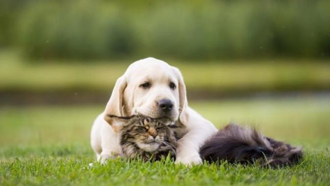 4  Nisan  Sokak Hayvanları Günü Dolayısıyla Dostlarımız İçin Alınabilecek Ürünler