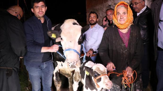 İneği Ölen Sabiha Özel'e Tarım Bakanlığı Yardım Eli Uzattı