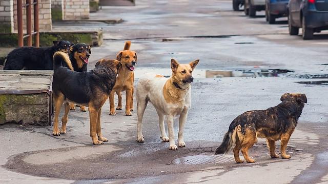 Ankara Batıkent'te 13 Köpek Zehirlenerek Öldürüldü