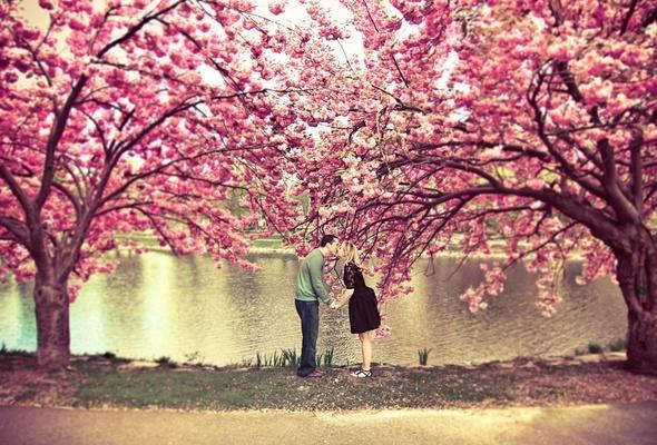 Aşkın Baharı