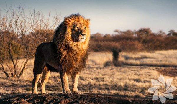 Tam Olarak Hangi Hayvanın Özelliklerini Taşıdığını Merak Edenlerin Bence'si! Burcunuza Göre Hangi Hayvansınız?