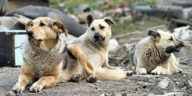 Çıkarın Artık Şu Yasayı! Ankara'da Yine Köpek Katliamı