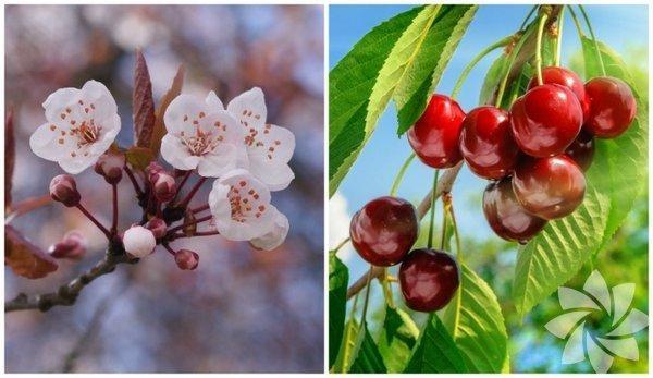 Bahar Geldi, Çiçekler Açtı: İşte Sebze ve Meyvelerin Çiçekleri!