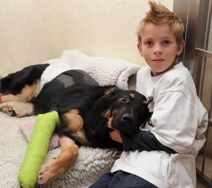 Kahramanlıklarıyla Ünlenen 6 Cesur Köpek!