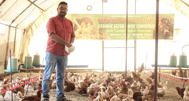 Müslüm Gürses Şarkıları Dinleyen Tavuklar Daha Verimli Yumurtlamaya Başladı!