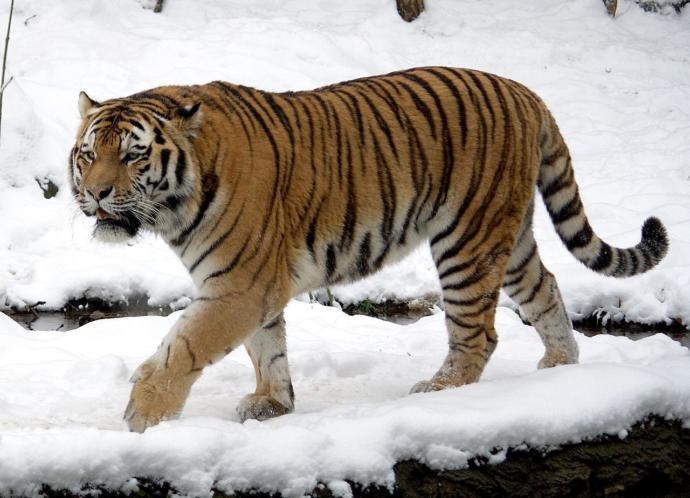 Dünyanın En Kuvvetli Çenesine Sahip 10 Hayvan!