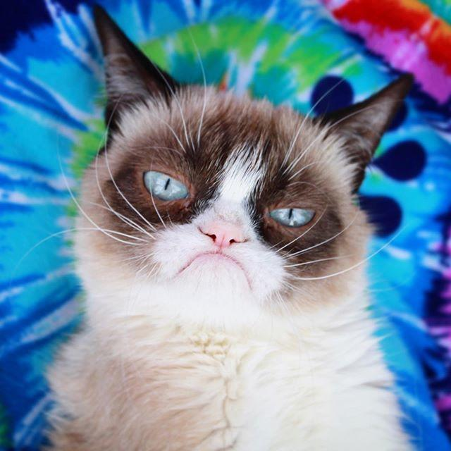 Huysuz Kedi (Grumpy Cat) 7 Yaşında Hayatını Kaybetti