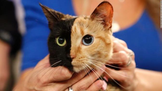 Kedilere Şenlik Var: Minnak Kediniz Paketin Sesini Duyunca Keyiften Dört Köşe Olacak!