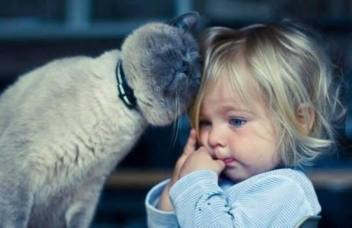 Kedi Gibi Ponçik Olmak İsteyen, Kız Çocukları İçin Kedili Bayram Kombini!