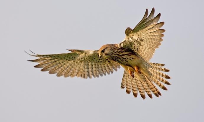 İsmini Çoğu Zaman Duyduğumuz Ama Özelliklerini Bilmediğimiz 5 Kuş Türü!