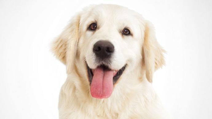 İnsanın En Sadık Dostu: Köpekler İle İyi Anlaşmanın Yolları!