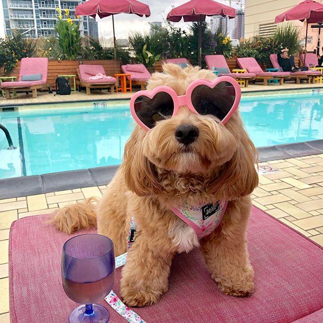 Instagram'ın En Cool Köpüşü Kenzie'nin, Hepimizi Kıskandıracak Paylaşımlarını İnceliyoruz!
