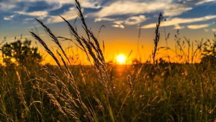 Organik Alışverişte Yeni Dönem: Tarım Kredi Kooperatif Market