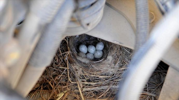 Kamyonun Motor Bölümündeki Yumurtalar
