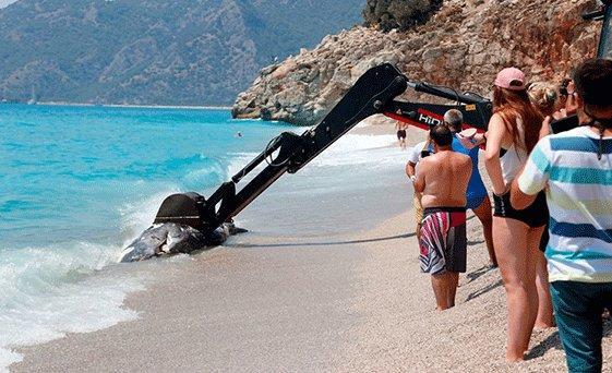 Ölüdeniz'de 3 Metre Uzunluğunda Balina Kumsala Vurdu!