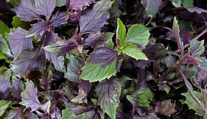 Yeşil Salataya Yeni Yorum