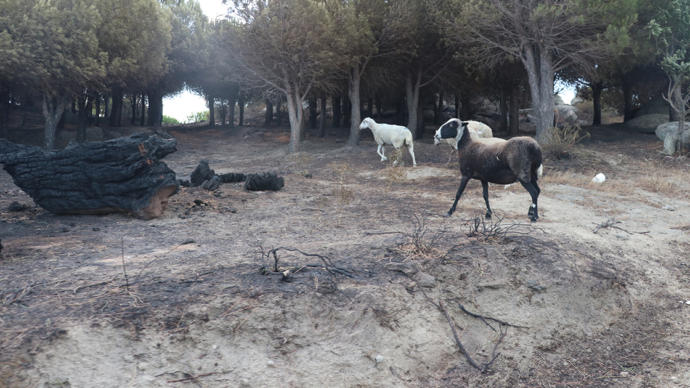 Marmara Adası Yangını: Bir Kişi Gözaltına Alındı