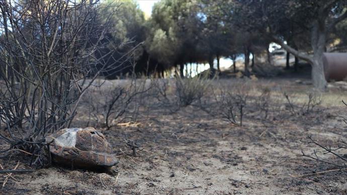 Bakanlık Açıkladı: Marmara Adası Kasım Ayında Ağaçlandırılacak