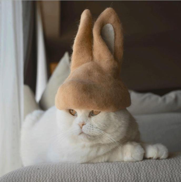 Kedilerin Kendi Dökülen Tüylerinden Yapılmış Şirin mi Şirin Şapka Koleksiyonu!