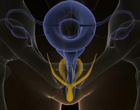 Sarı: Klitoris Mavi: Vajina