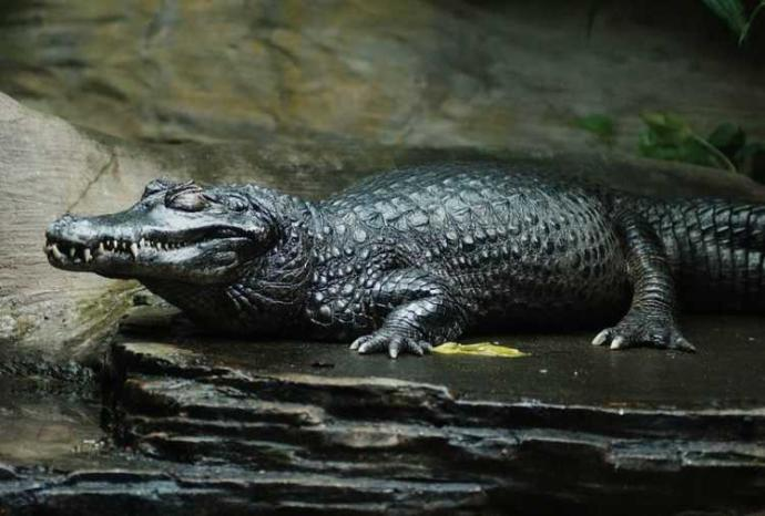Brezilya Ormanlarında Akıllara Durgunluk Veren Tehlikeli Yaratıklar