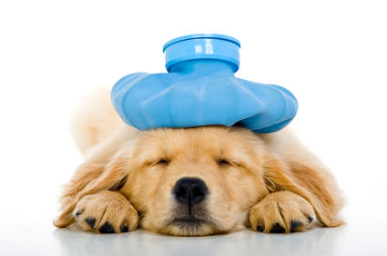 Belçika'da Tartışmaya Neden Olan Rapor: Köpeği Hasta Olan Çalışana