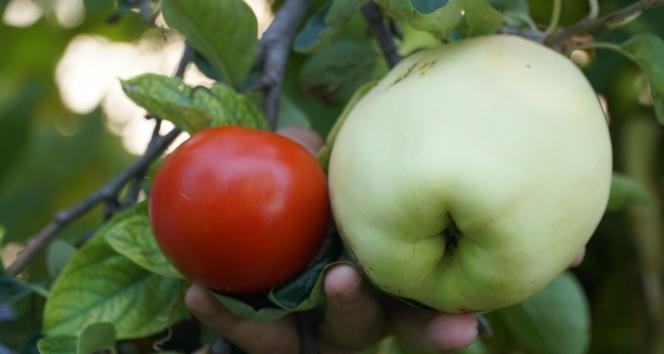 Ne Olduğu Bilinmeyen Meyve