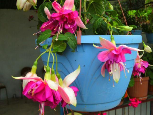 Kasvetli Havaların Yarattığı Negatif Duyguları Evinizden Atmanıza Yarayacak Çiçek Önerilerim